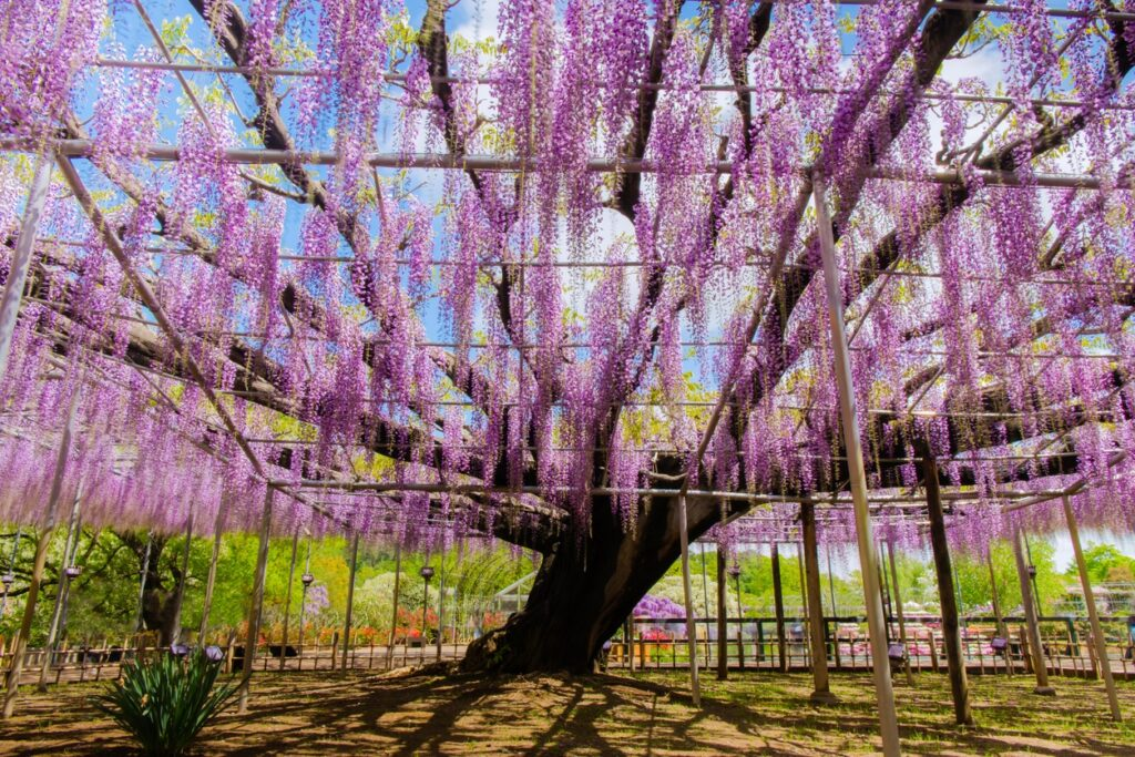 Ashikaga Tochigi Japan